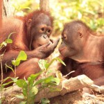 Cheap flights from London to Borneo from Ł502 (€606)!