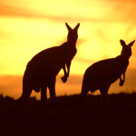 Error fare deal - flights from Dublin to Australia €406 or New Zealand
