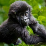 KLM/Air France: Roundtrip flights to Uganda from Germany for €454!