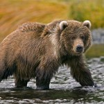 Flights to Kodiak Island (Alaska) from Germany from Ł388/€483!!