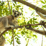 Roundtrip flights to exotic Madagascar from UK from Ł261/€704!