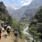 Roundtrip fligths to Kathmandu from Paris/Brussels from €416/Ł326!