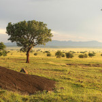 Return flights to Uganda from Germany for €405!