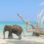 Return flights from Germany to exotic Andaman Islands €485!