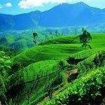 Cheap direct charter flights from London to Sri Lanka for £269!
