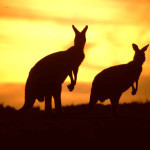 Super cheap return flights from London to Australia or New Zealand £392 (€441)!