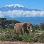 Cheap return flights from Germany or Brussels to Kilimanjaro from €401!