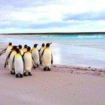 Return flights from London or Amsterdam to Falkland Islands from £717 or €810!