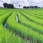Cheap flights from Amsterdam to Vietnam from €349!