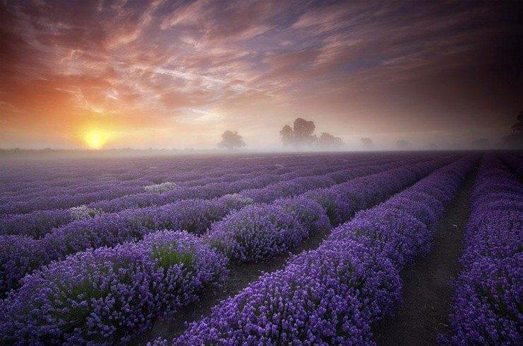 World's most amazing places you have probably never heard of..Lavender field