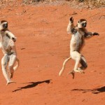 Cheap flights from UK to Madagascar
