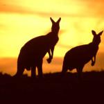 Error fare deal - flights from Dublin to Australia €406 or New Zealand