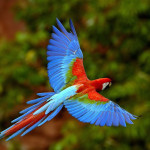 Cheap return flights to Central America from Germany from €431!