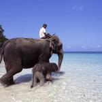 Open jaw flights to Andaman Islands (main season 2014/2015) from €512!