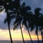 USA - Cheap return flights from Brussels to sunny Miami from €300!