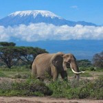 Cheap return flights from Europe to Kilimanjaro, Tanzania from €436!