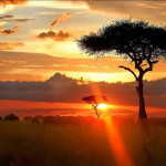 Cheap flights to Botswana from Madrid, France or the UK from €454 or £431!