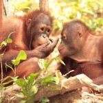 Return flights from Europe to Borneo from €466!