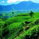 Etihad Airways - return flights from Germany to Sri Lanka €363!