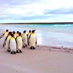 Round trip flights from Italy to Mount Pleasant, Falkland Islands for €891..