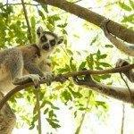 Cheap return flights from Paris to famous Madagascar from €505!