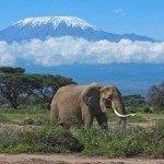 Qatar Airways cheap flights Spain to Kilimanjaro from €386 roundtrip!