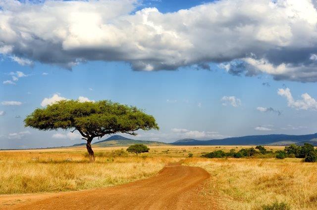 Cheap flights from Oslo to South Africa, Uganda, Kenya, Rwanda or Tanzania from €332!