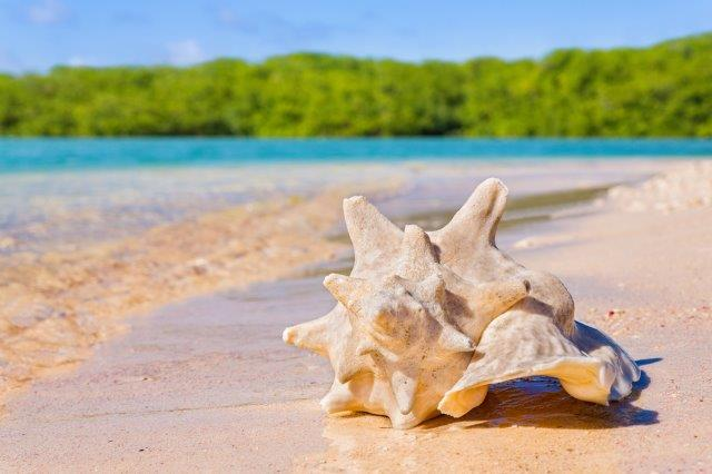 Cheap flights to Bonaire airline promotions and discount deals Flynous