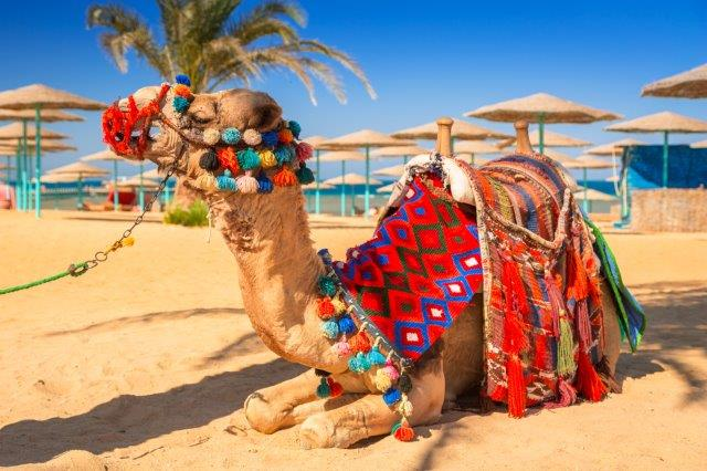 Non-stop flights from Amsterdam to Hurghada, Egypt from €66!