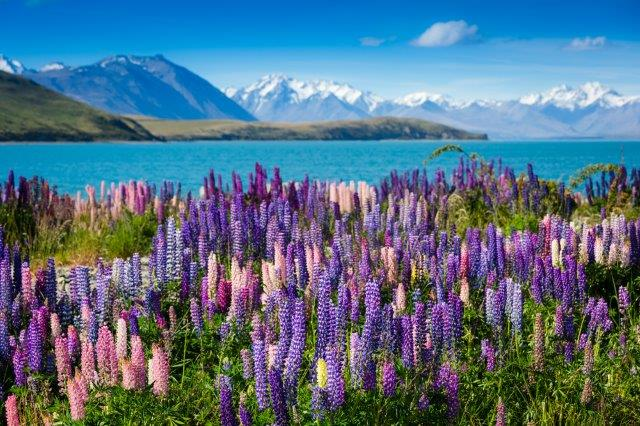 Star Alliance full-service flights from Amsterdam to Auckland, New Zealand from €706!
