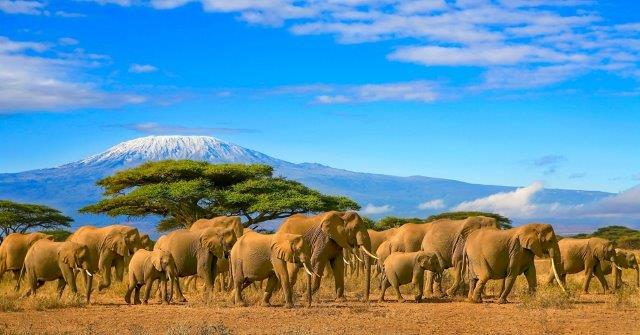 Cheap flights from Italy to Tanzania (Zanzibar, Dar es Salaam or Kilimanjaro) from €365 roundtrip!