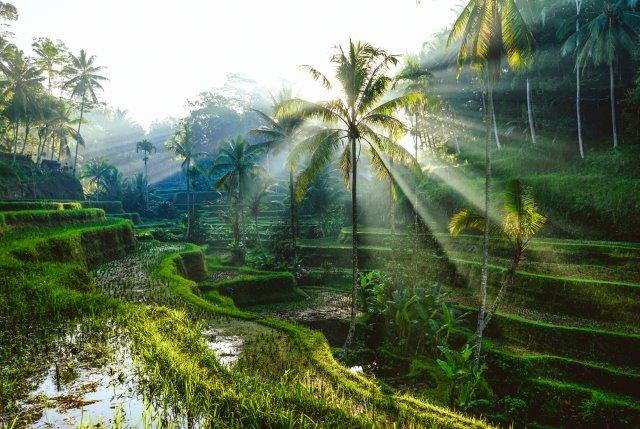 Cheap flights from Oslo to Bali or Jakarta, Indonesia with Air France-KLM from €406!
