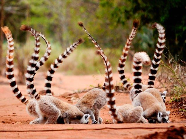 Full-service Air France flights from Austria to Madagascar from €487 return!