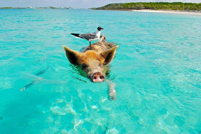 Cheap return flights from Switzerland, Germany or Vienna to the Bahamas from €412!